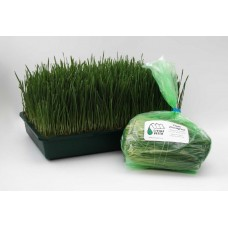 Wheatgrass, Fresh & Bagged